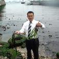 横浜港インナーハーバーに自生するアマモ(5月17日)