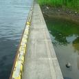 潮入の池改良(7月3日)