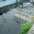護岸外の実験干潟