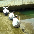 潮入の池干潟見学会(7月24日)