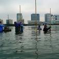 海苔網設置(12月21日)