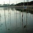 海苔網のようす(12月25日)