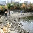大岡川河口干潟