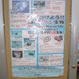 沖縄の危険生物