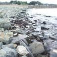 志津川の人工海岸