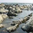 荒崎の海岸
