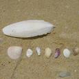 海の中道の貝殻