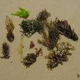 海の中道の漂着海藻