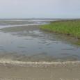 葛西人工海浜(東渚)