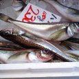 酒田魚采市場(2007年10月)